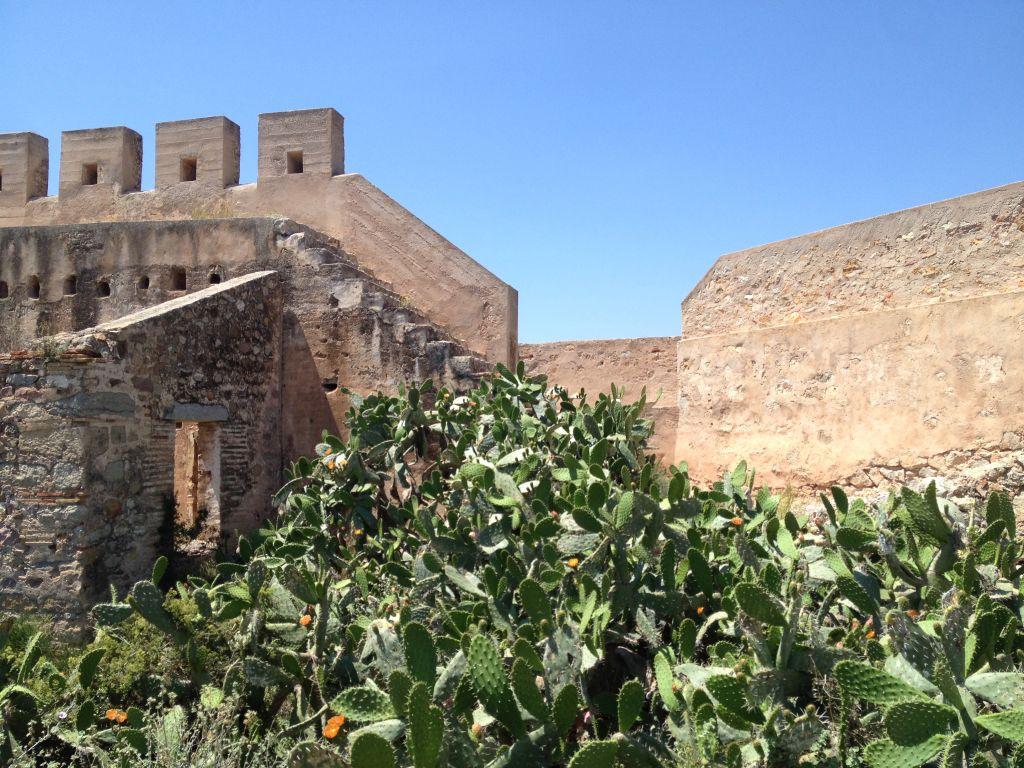 Burg Sagunto Kaktus