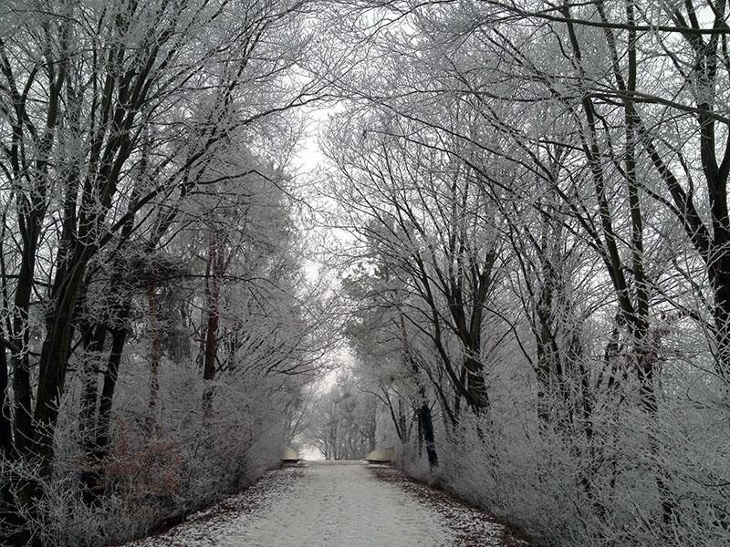 Weg im Winterwonderland