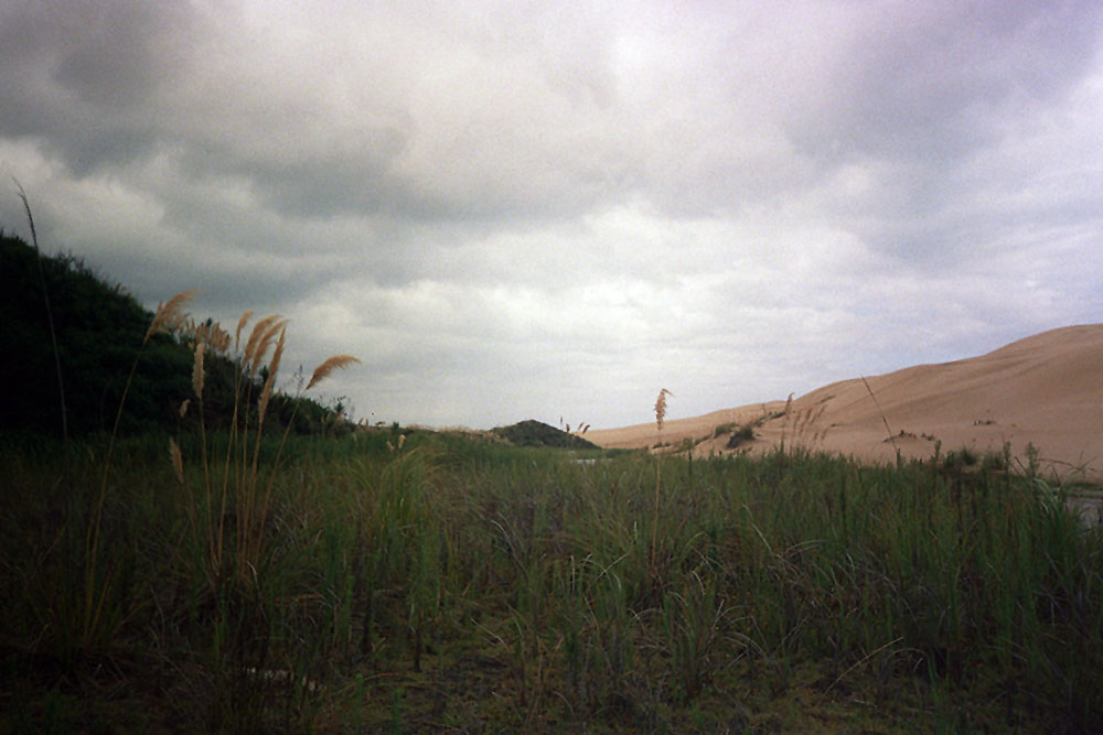 Dünen und viel grünes Gras im Northland