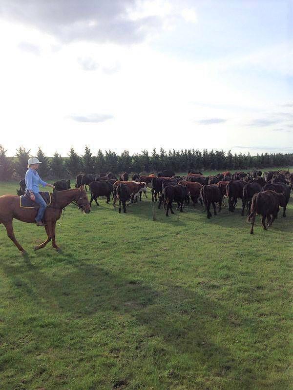 Als Cowboy auf einer Farm in Australien
